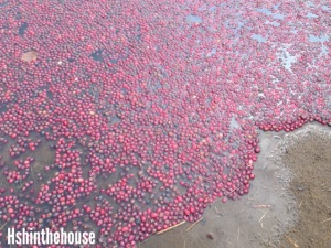 cranberries floating on lake