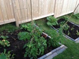 square garden plots