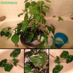 green leafy plant in the bathtub