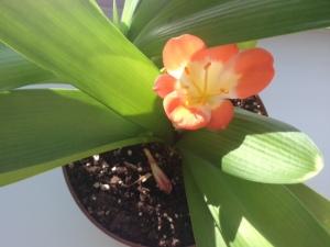 orange office plant