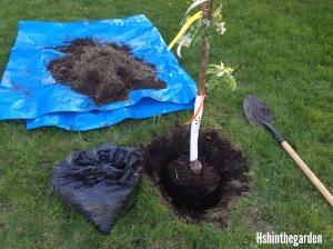 fruit tree in hole