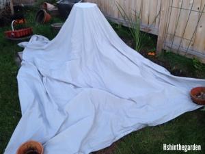 garden plot covered in grey sheet