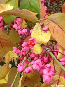 pink flowers on yellow leaves