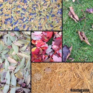 collage of fall leaves