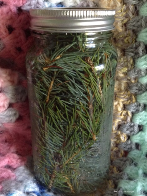 Spruce and vinegar in a mason jar